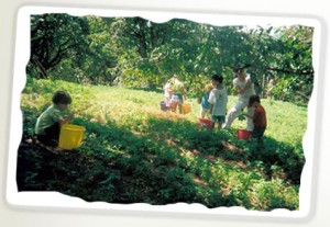 aboutleveringorchardpicking